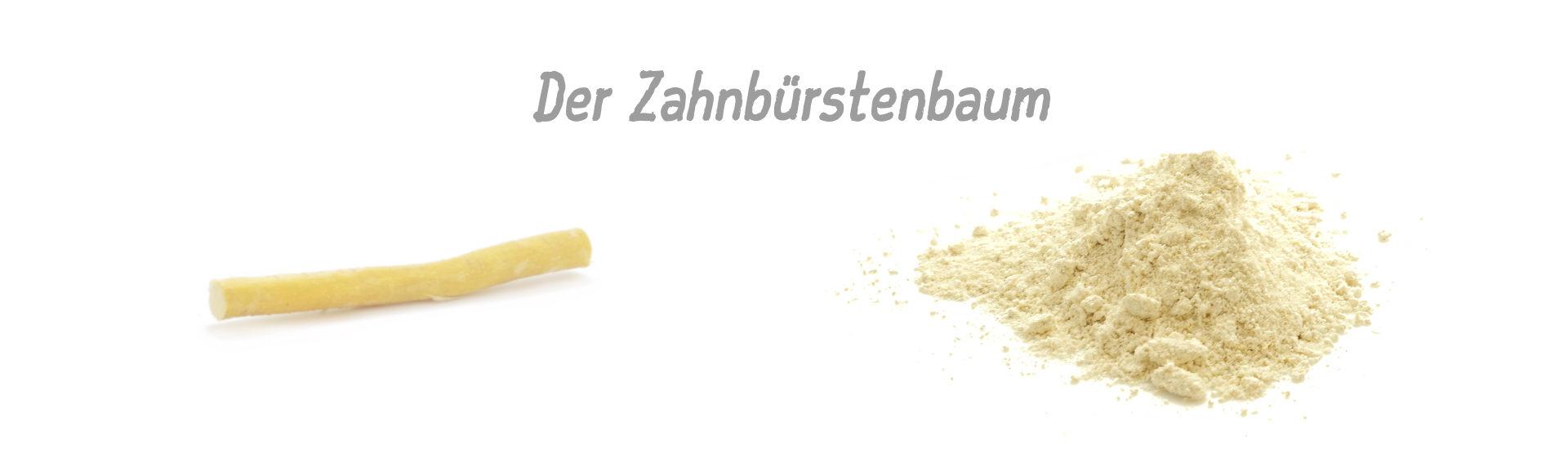 """Der """"Zahnbürstenbaum"""" - Infos zur SWAK-Zahnbürste"""