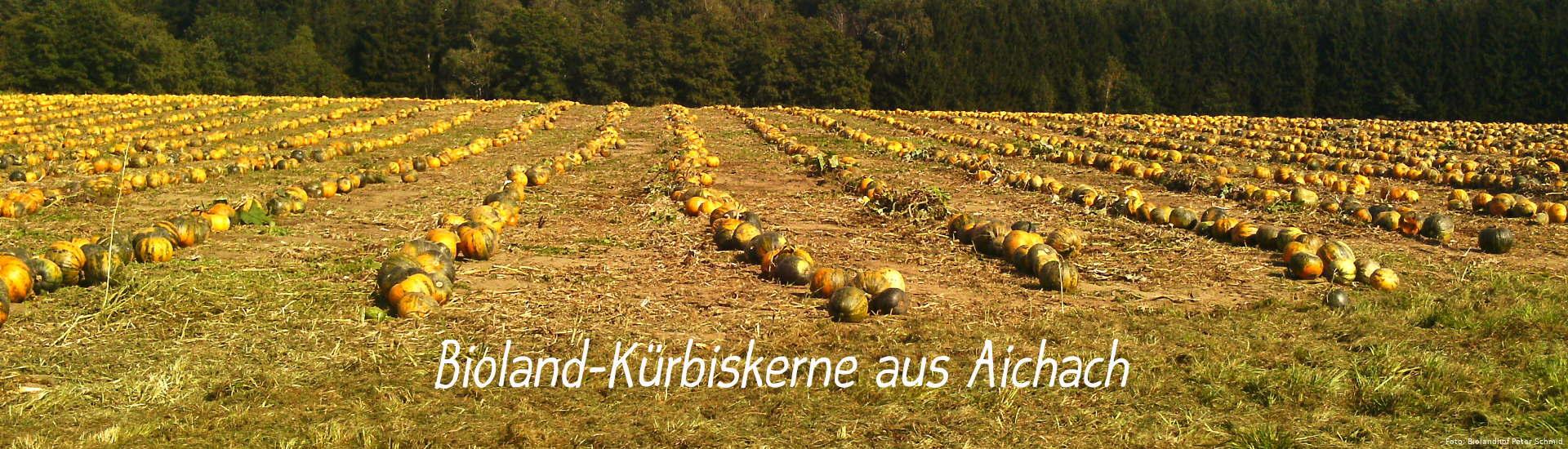 Kürbisernte - Bioland-Kürbiskerne aus Aichach